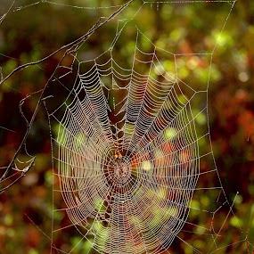 The web by Alf Winnaess - Uncategorized All Uncategorized