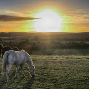 by Paul Jenking - Animals Horses (  )