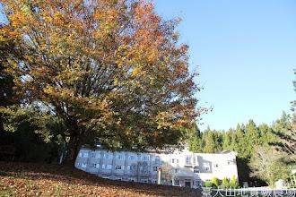 Photo: 拍攝地點: 梅峰-伴月坡 拍攝植物: 青楓 拍攝日期: 2014_12_18_Vam