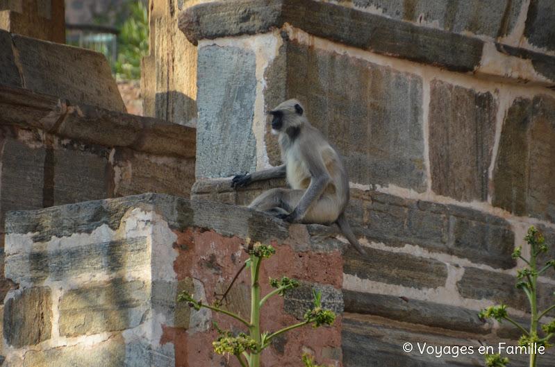Kumbhalgarh, singe