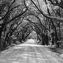 by Steve Wilking - Black & White Landscapes