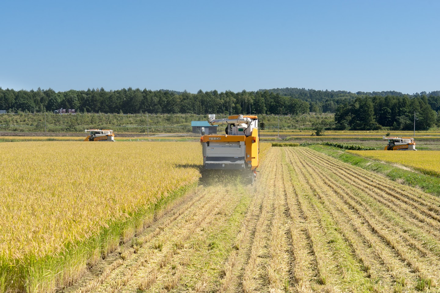 【No.14】黄金に実った稲の収穫が始まりました