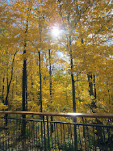Photo: Sunlight reflected on a fence in front of a golden forest at Hills and Dales Metropark in Dayton, Ohio.