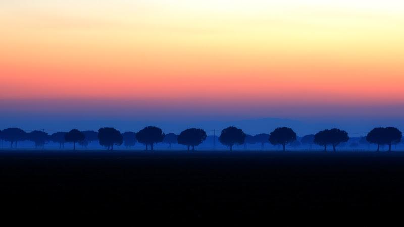 Pini nella nebbia di michelangelo_florilegio