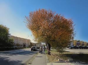 Photo: Vișin Turcesc (Prunus Mahaleb)  - din Turda, Calea Victoriei - 2018.10.16