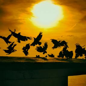 FLY WITH SUN by Amritakshya Dey - Animals Birds