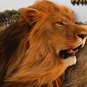 Angry Lion Wild Simulator icon