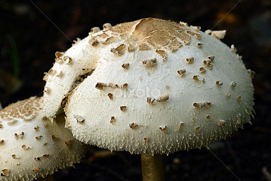by Saiful El-Shyrazy - Nature Up Close Mushrooms & Fungi