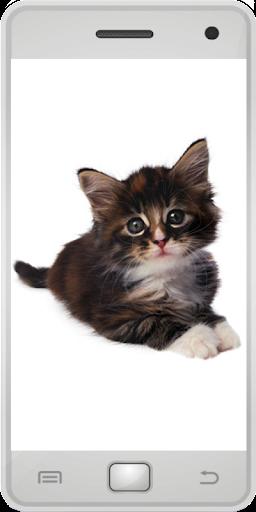娛樂必備免費app推薦|猫の写真線上免付費app下載|3C達人阿輝的APP