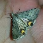 Golden Arches moth