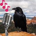 Crow sounds and calls icon