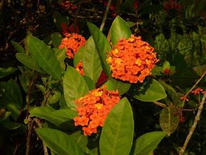 Photo: Flore au Coconut Lagoon à Kumarakom Inde