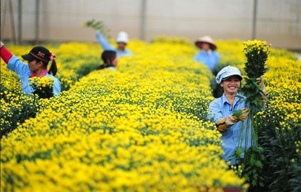 Image result for xuất khẩu lao động nông nghiệp nhật bản