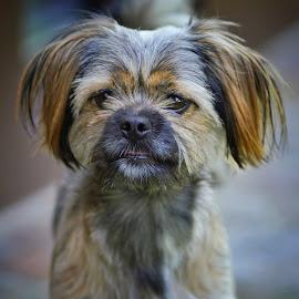 Mimi by Albin Bezjak - Animals - Dogs Portraits
