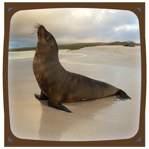 Seal Live Wallpaper