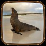 Seal Live Wallpaper Icon