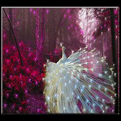 White Peacock Live Wallpaper