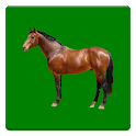 Equine Fluid Therapy icon