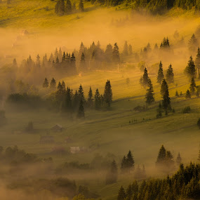 morning by Sorin Tanase - Landscapes Prairies, Meadows & Fields ( hills, fog, forest, sunrise, morning, shadows )