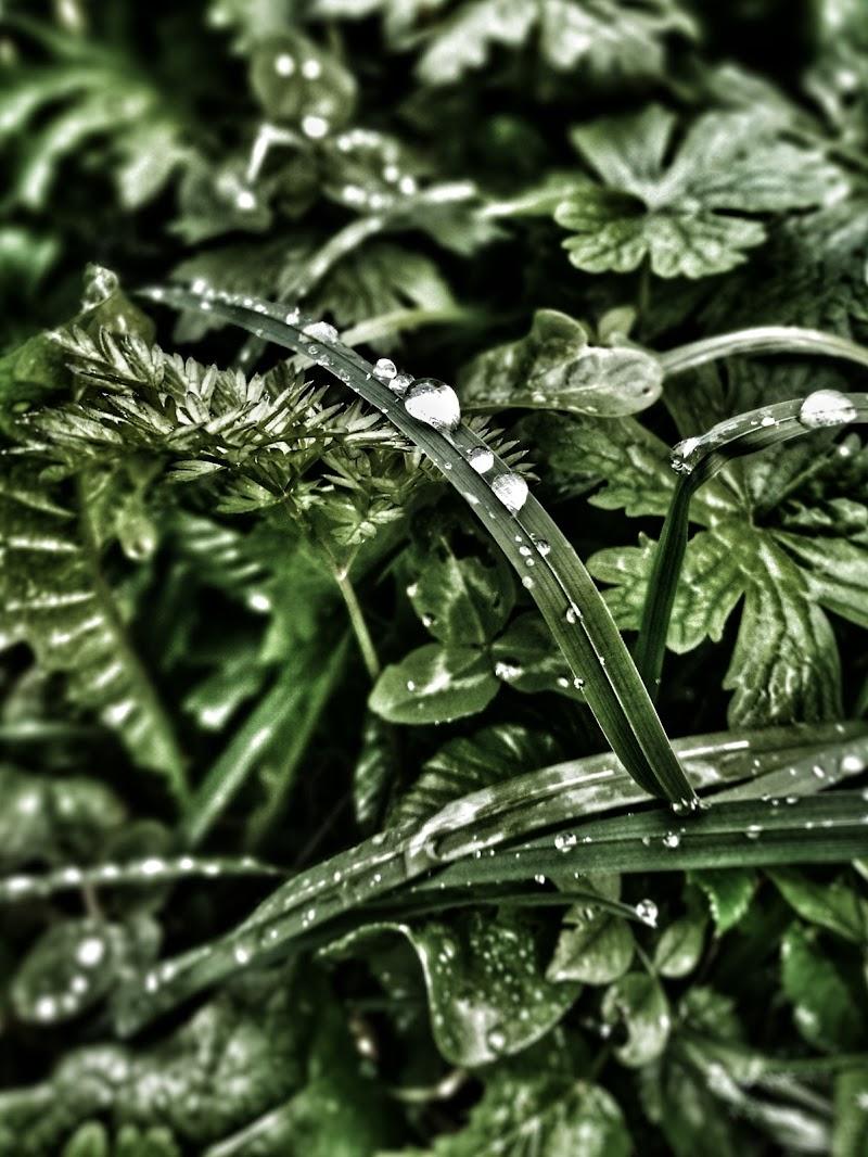Rain drops di maura_carniel