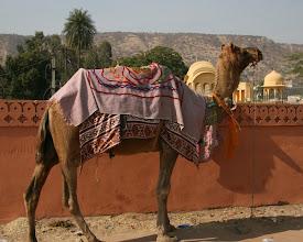 Photo: Kameleita oli paljon