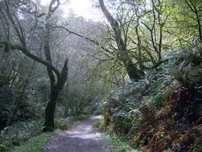 Photo: Bear Valley Trail