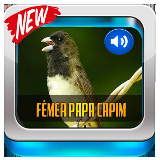 PALCO BAIXAR CANTO DO MP3 PRETO PASSARO