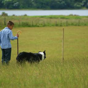 One boy and his dog by Morag Soszka - Animals - Dogs Portraits ( sheepdog, sheepdog trail, collie dog, one man and his dog, one boy and his dog )