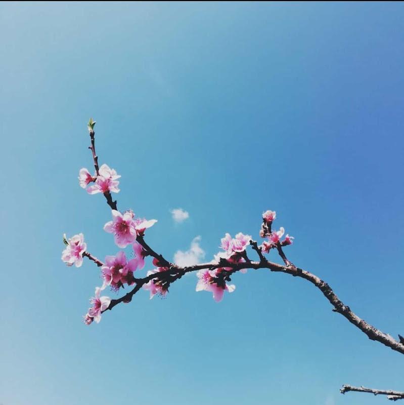 Note fiorite di cubo-blu