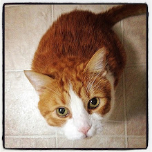 Photo: Looking up for food #intercer #cat #pet #cats #pets #catsofinstagram #petsofinstagram #eyes #look #funny #beautiful #life #cute #animal #orange #white - via Instagram, http://ift.tt/1tlzOve