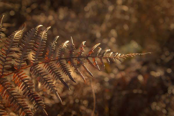 following Fall di Jiggly