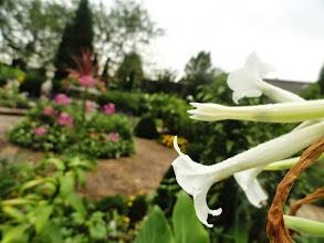 Photo: Flowers in the morning garden after the rain at Wegerzyn Gardens in Dayton, Ohio.