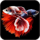 Betta Wallpaper APK