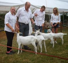 Photo: Klasse 3: witte lammeren geboren in maart en april.  1a. Marena v/d Voordijk; 1b. Ollie; 1c. Mylene v/d Voordijk;  2a. Okkie.
