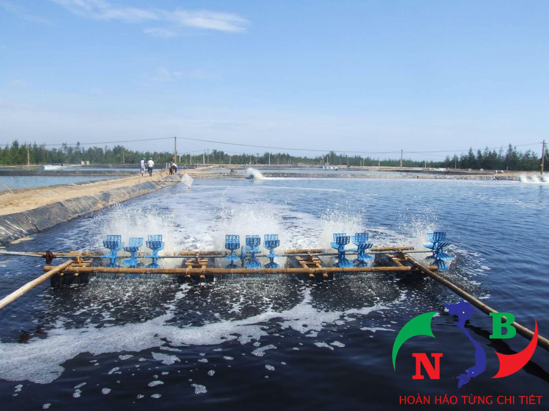 2 tiêu chí cần lưu ý trong phát triển nuôi trồng thủy sản