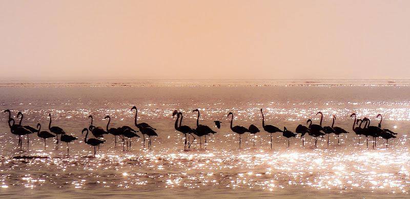 Namibian Atlantic Ocean di AnUseless
