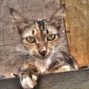 hallo by Christian Bgr - Animals - Cats Kittens