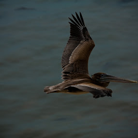 by Justin Kifer - Animals Birds