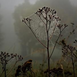 by Miroslava Winklerová - Nature Up Close Other Natural Objects