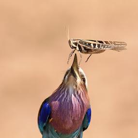 Fast Food by Andrew Morgan - Animals Birds ( bird, food, safari, wildlife, eating )
