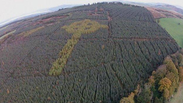 Khu rừng Ireland bí mật hiện lên cây Thánh giá kiểu Celtic