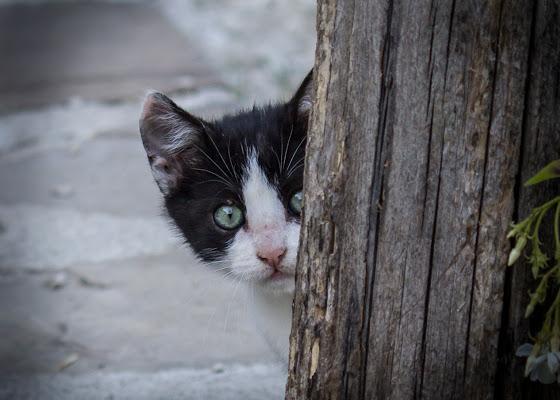 il piccolo curioso..... di g.paciphoto