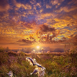 Autumn Wings by Phil Koch - Landscapes Prairies, Meadows & Fields ( trending, country, shadow, rural, office, scenic, hope, canon, beautiful, pastel, weather, season, sky, emotions, natural, fallcolors, inspired, heaven, morning, field, light, peace, shadows, dawn, autumn, photography, love, sunrise, mood, vertical, endless, clouds, fineart, sun, life, colors, unity, joy, lines, popular, arts, meadow, wisconsin, art, living, green, nature, inspirational, dramatic, portrait, horizons, horizon, environment, sunlight, outdoors, sunset, earth, travel, serene, landscape,  )