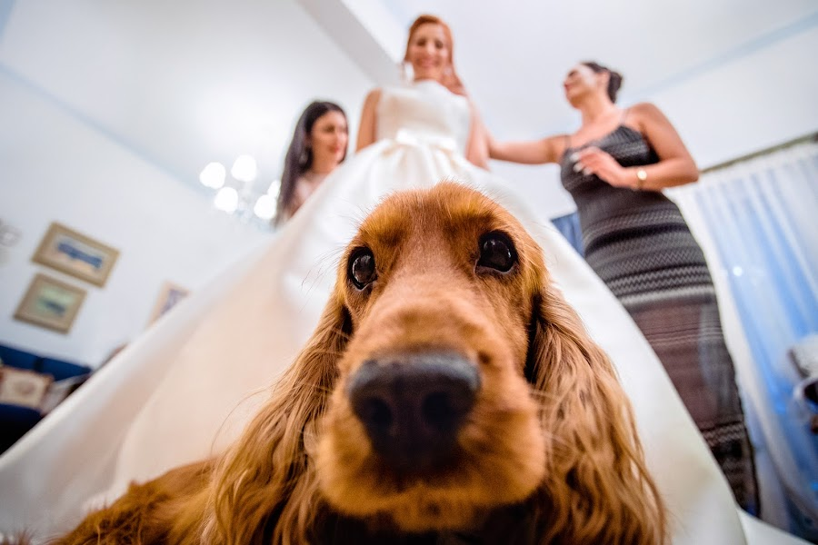 Wedding photographer Elena Haralabaki (elenaharalabaki). Photo of 23.03.2020