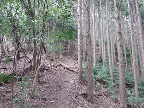 植林との境を登る
