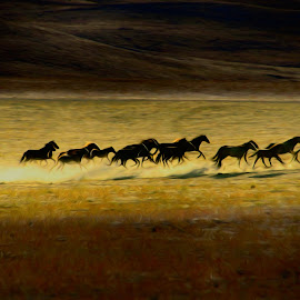 Late evening run by Gaylord Mink - Digital Art People ( wild horses, animals, sundown, digital art )