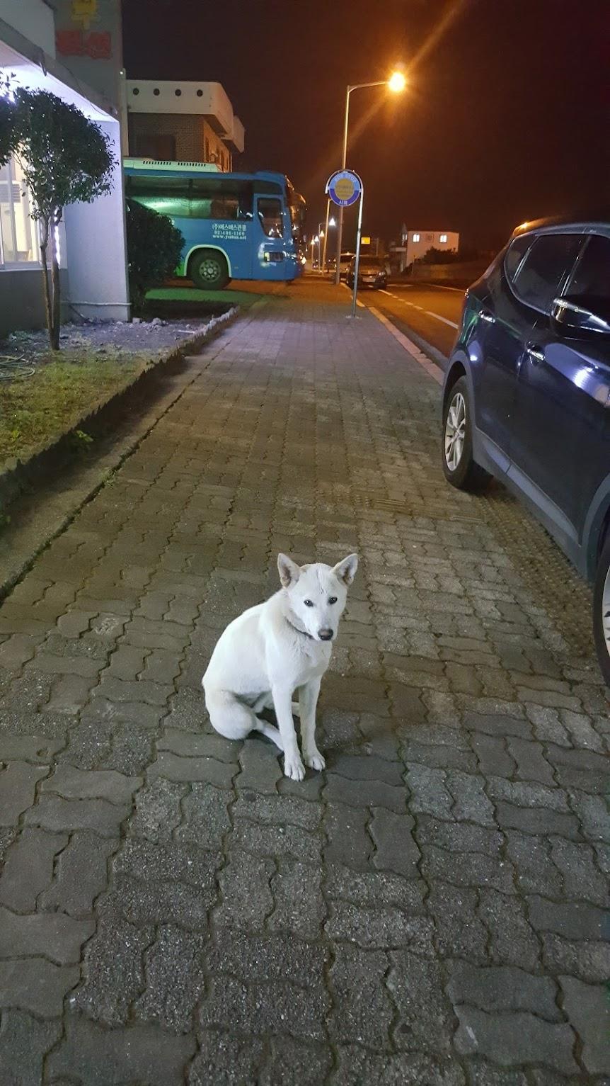 Chú chó trắng bí ẩn
