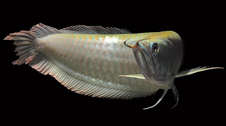by Koko Anaknaga - Animals Fish
