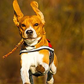 StickSmokin'SuperSmoothie by Mick Brinkmann - Animals - Dogs Portraits ( smoothie, pwc84 )