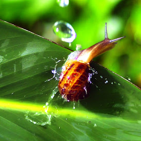 Snail in Action by Rodolfo Dela Cruz - Instagram & Mobile Other ( animal, motion, animals in motion, pwc76 )